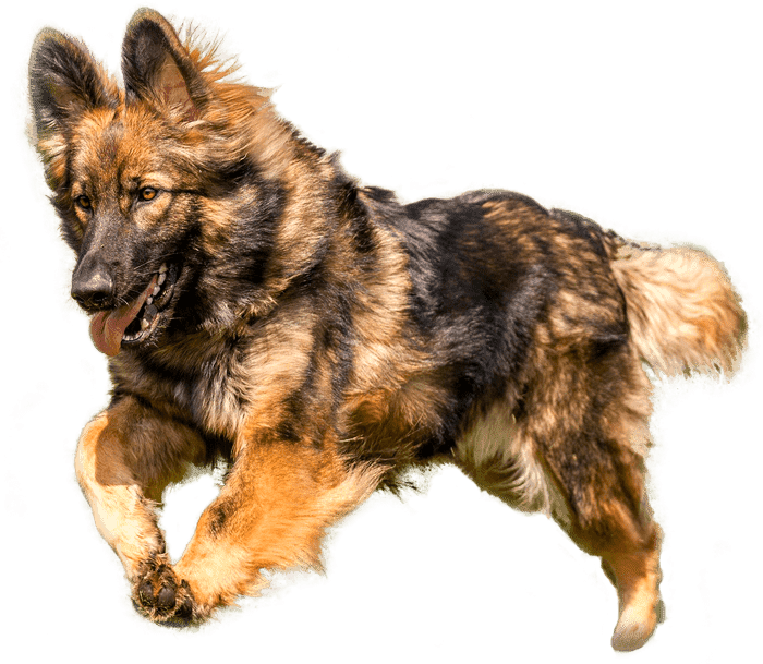 Pet Food Acitex Dog